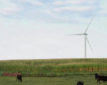 More than 573,000 birds are killed by the wind farms each year, according to an estimate in a scientific journal in March.