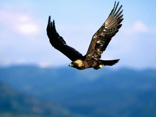 Bald Eagles In Kansas