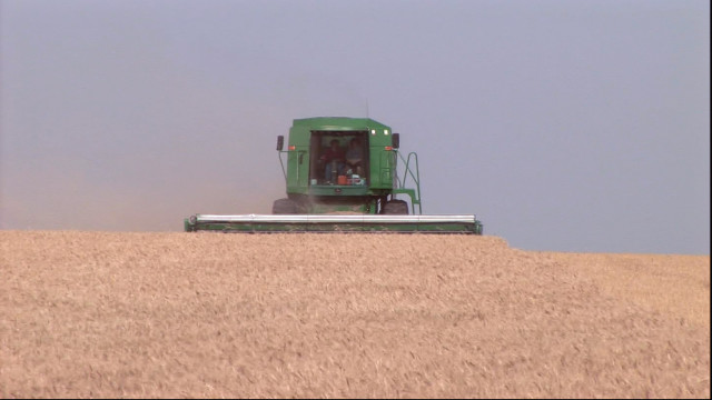 Kansas Combines Begin to Roll