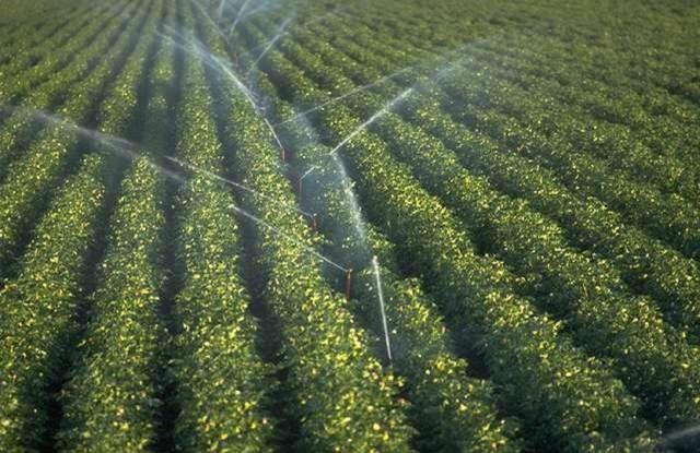 Kansas loses 800 small farms, bigger operations unchanged