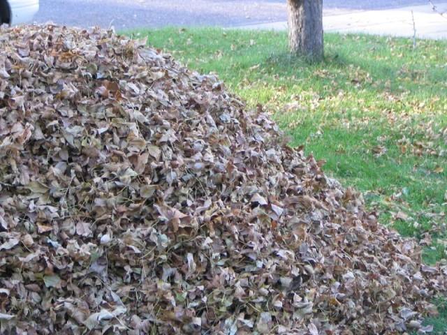 Salina Leaf Collection Begins Next Week