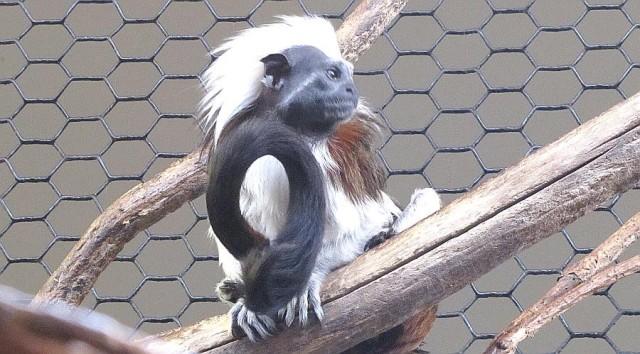 Tamarin Monkeys Die At Kansas Zoo