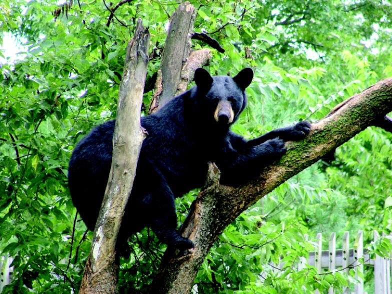 Topeka Zoo Bear Dies In Surgery