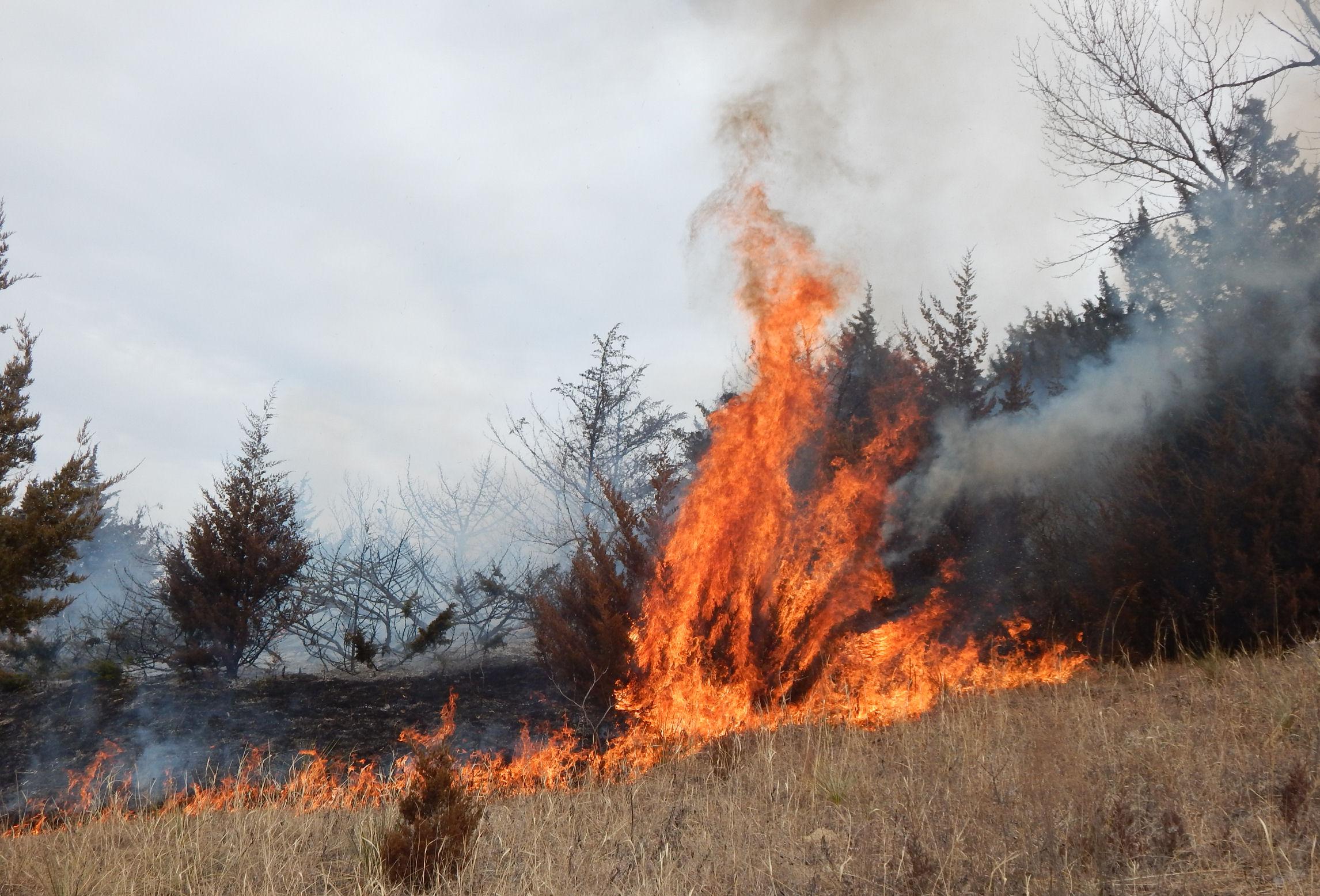 PHOTO GALLERY: Fire Burns Salina Park