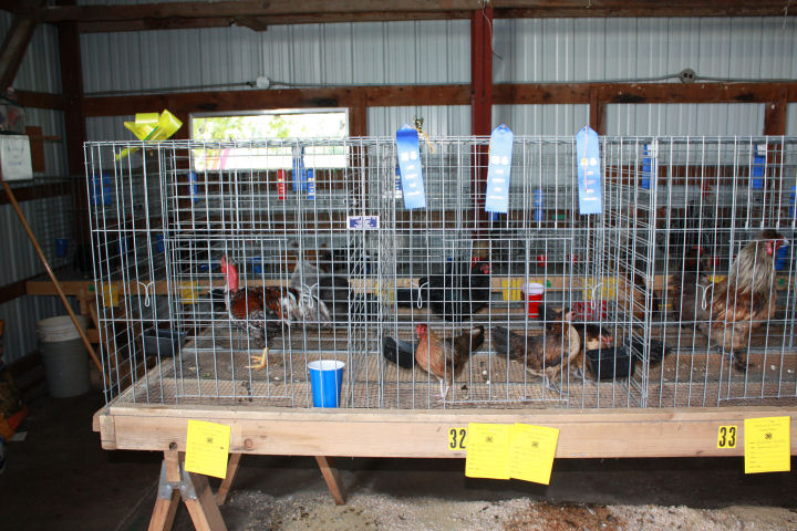 All Kansas Poultry Show Events Cancelled