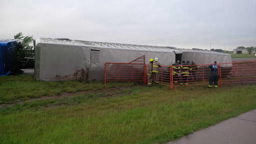 Cattle Truck Overturns On Kansas Highway