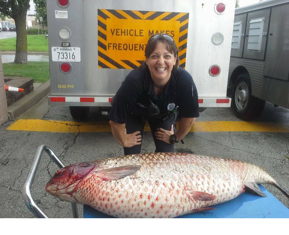 60 Pound Fish Found In Ditch