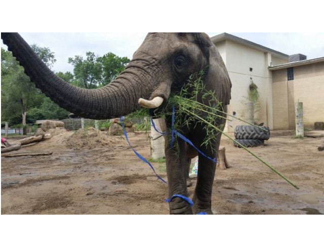 Wichita zoo's new elephants settle in ahead of grand opening
