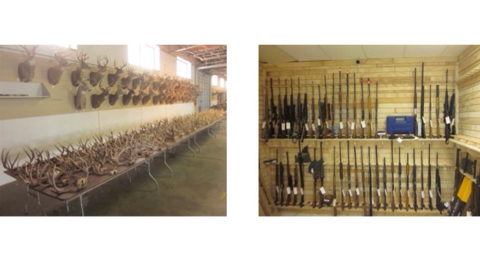 Seized Wildlife Items To Be Auctioned In Salina