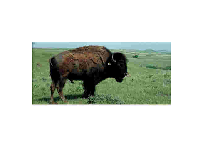 State to Auction Off Buffalo