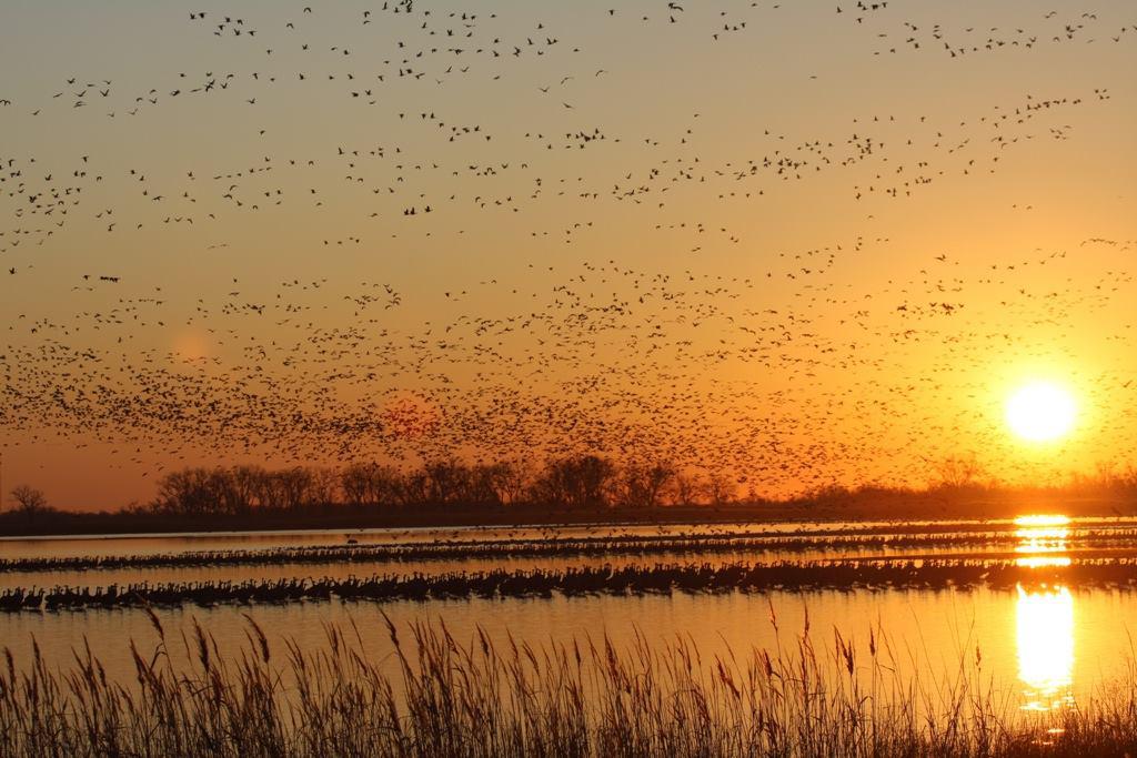 Avian Cholera Detected in Kansas