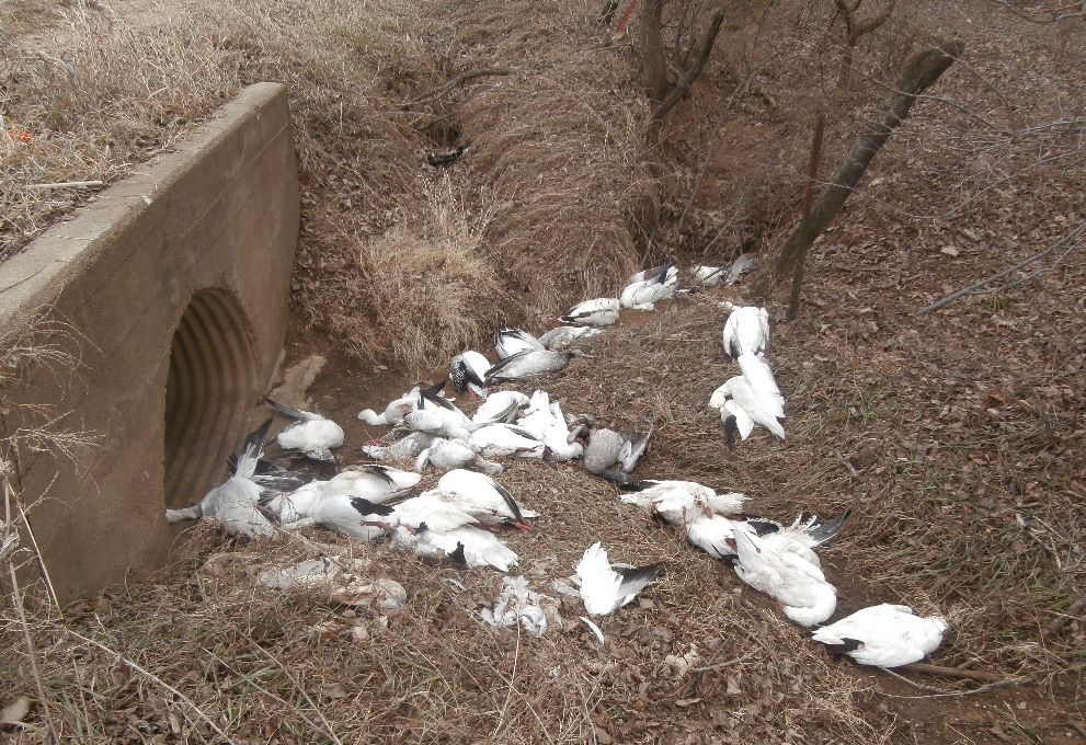 Deputies, Wardens Investigating Bird Crime