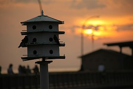 Topeka Cemetery Provides Special Bird Houses for Songbirds