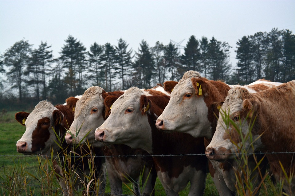 Farm Expo Focus: Cattle Handling