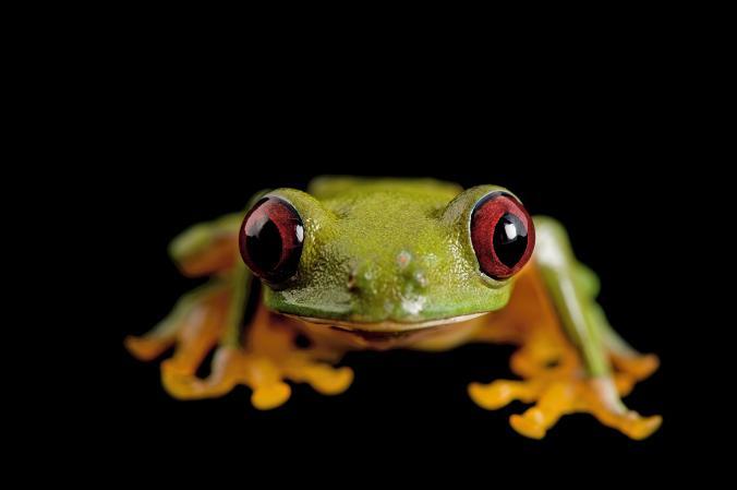 © Joel Sartore / National Geographic