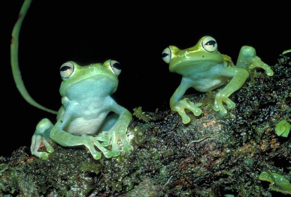 Catch the Frogs at Party for the Planet