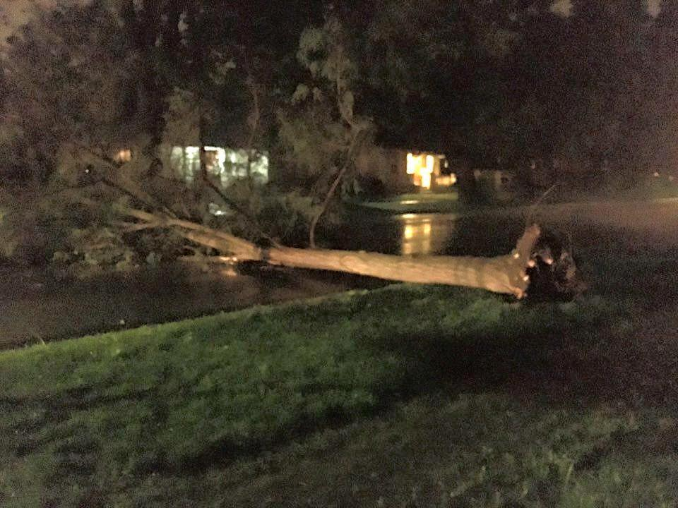 A possible microburst impacted Salina. A large tree down at 9th and Washington totally blocking 9th Street. Photo by Jeff Haines
