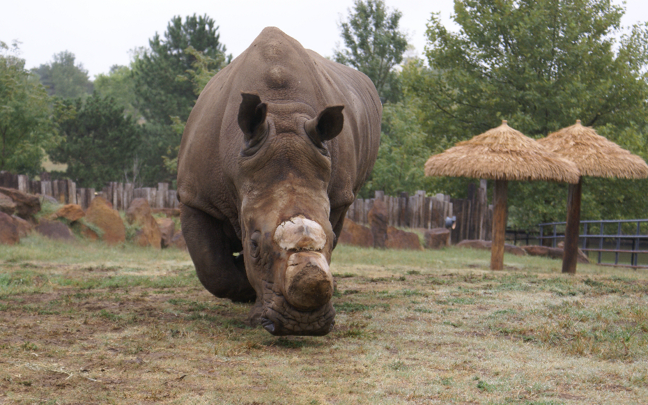 Zoo Bids Fond Farewell to Milton
