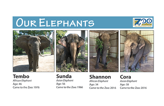 Elephant Movie Star Moves to Kansas Zoo
