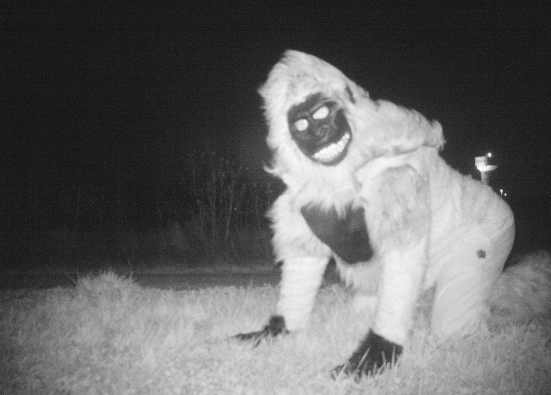 Wildlife Cameras Capture Prank Photos