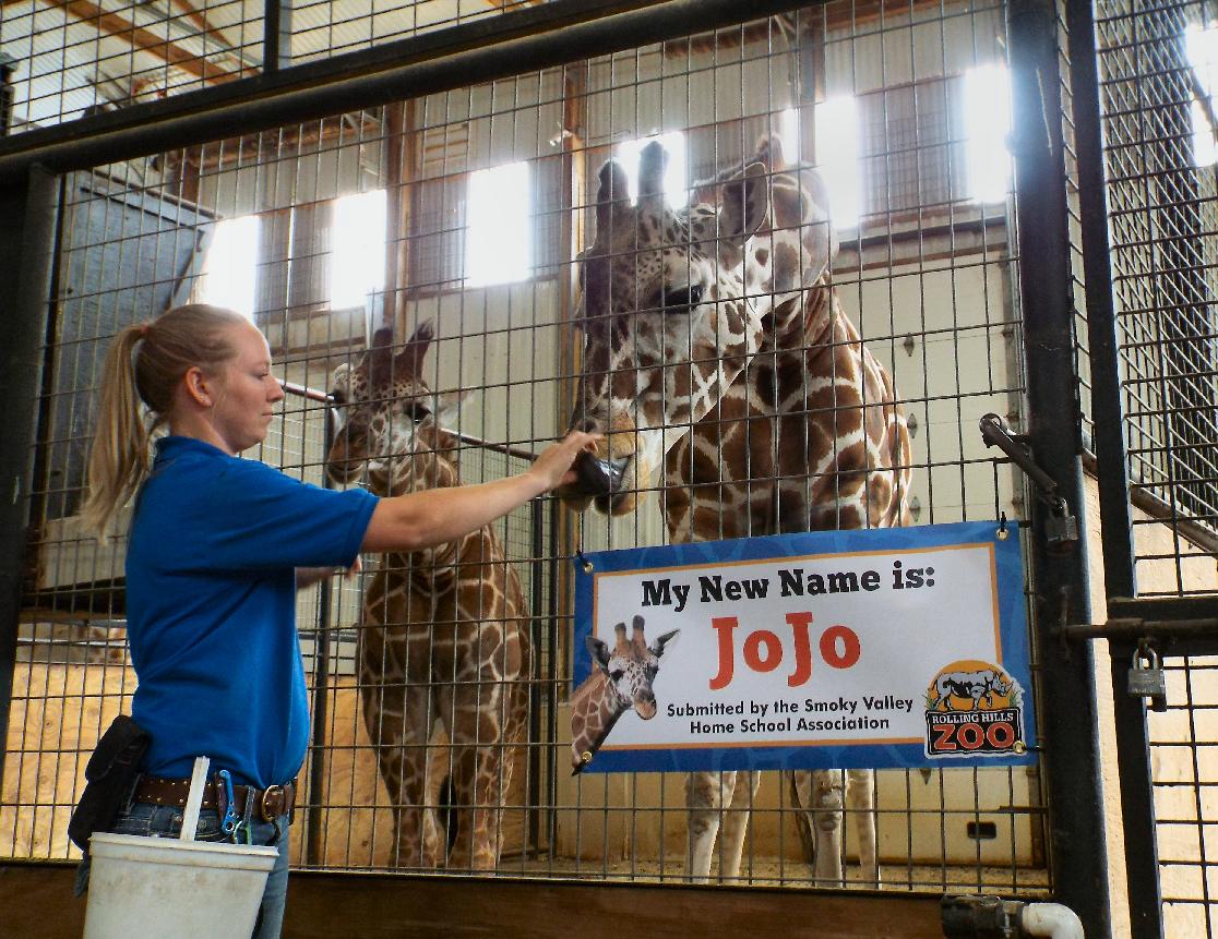 VIDEO: JoJo the Giraffe