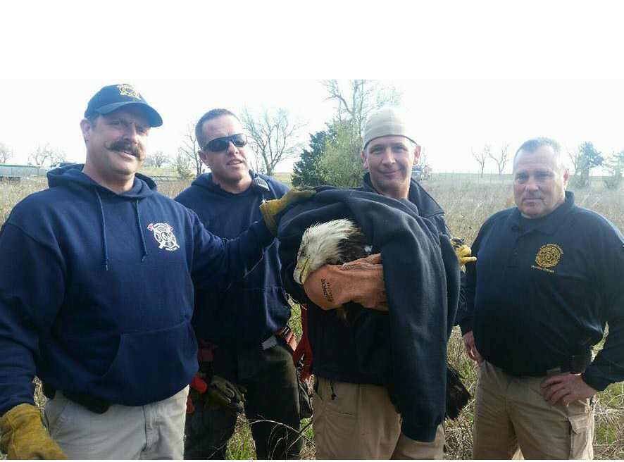 First Responders Rescue Bald Eagle