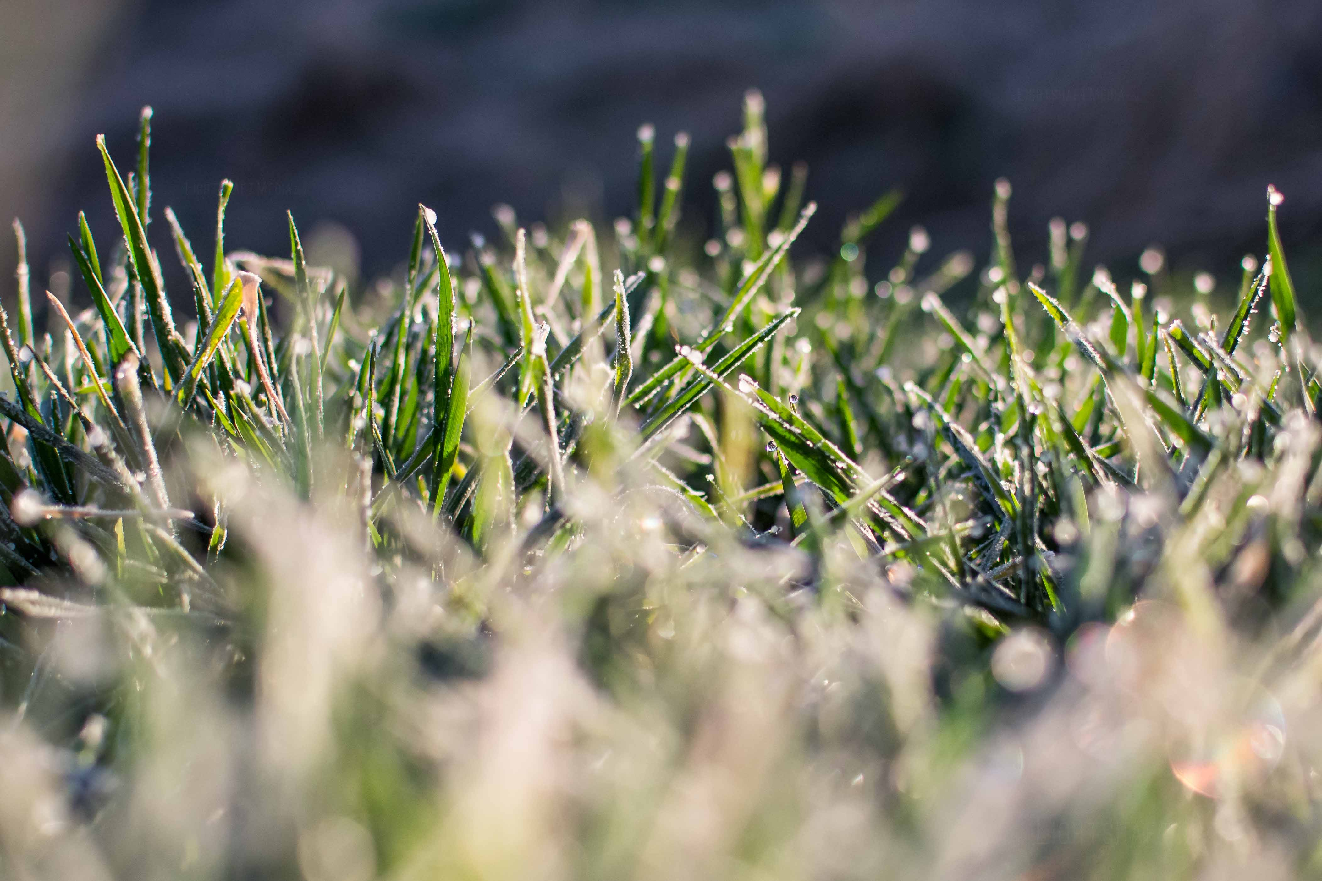 Rains Help Winter Wheat, Delay Corn Planting in Kansas
