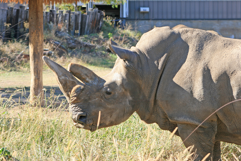Milly Will Be Missed – Zoo Mourns Loss of Rhino