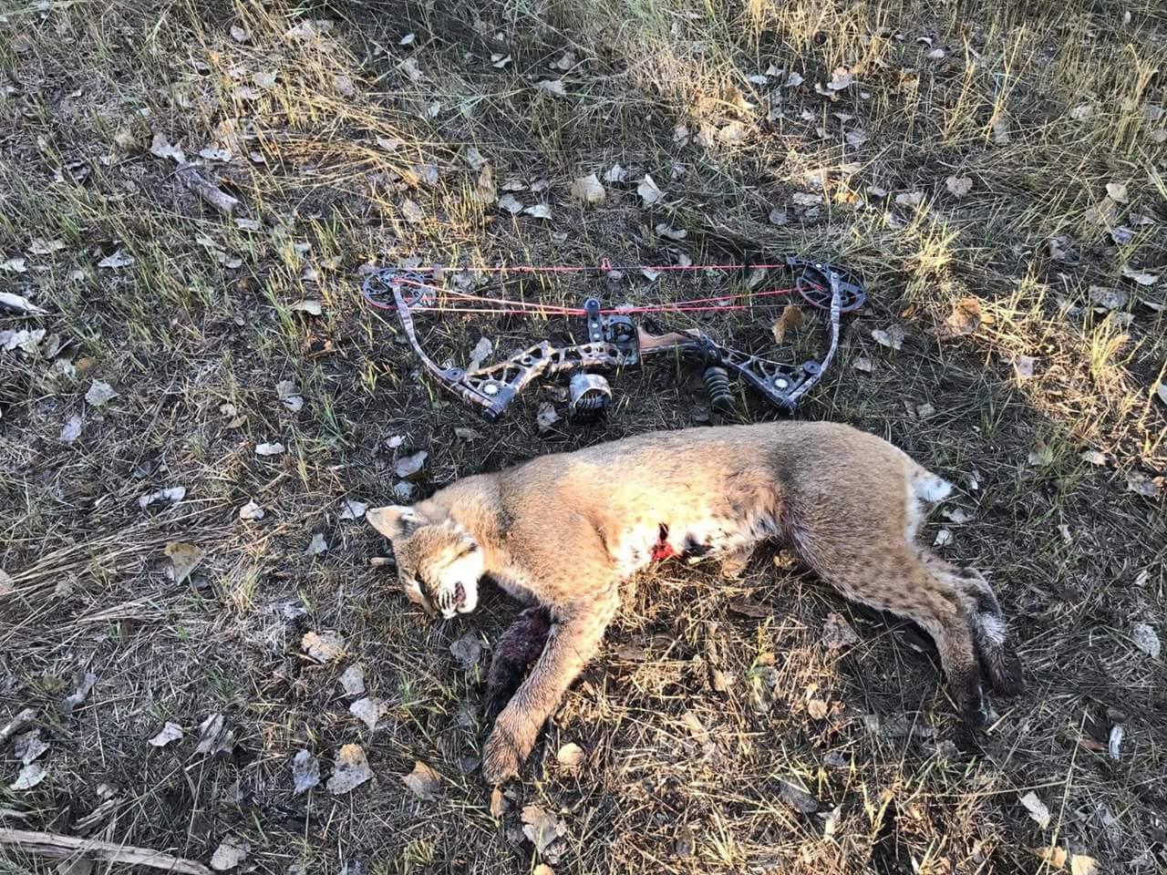 Kansas Game Wardens Catch Alleged Poacher