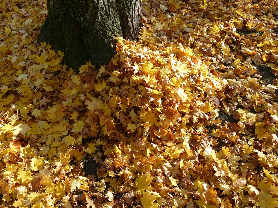 City Preparing Curbside Leaf Collection