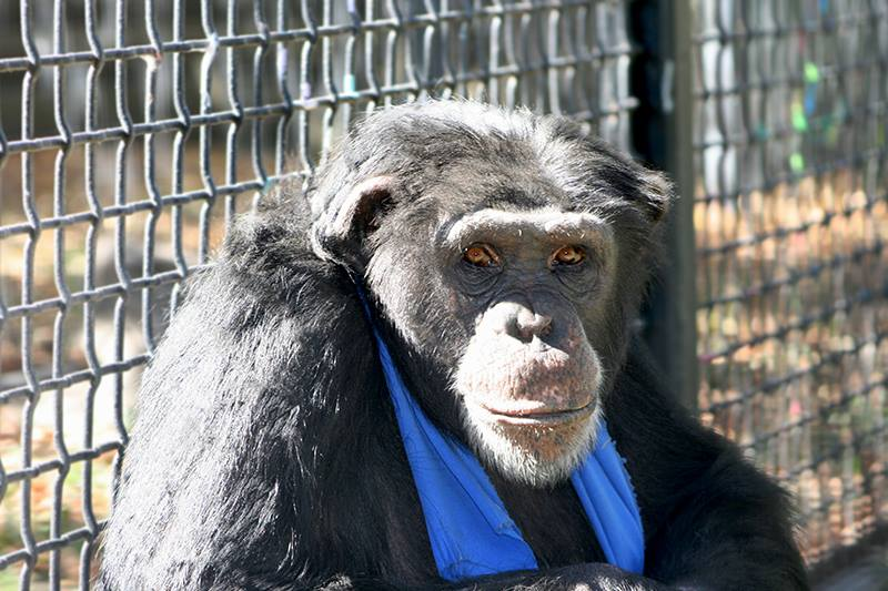VIDEO: Monkeying Around at Rolling Hills Zoo