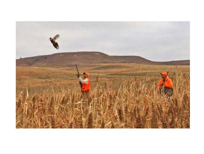 Kansas Bird Hunters Anticipate Second Saturday In November